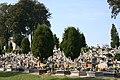 Gogołów - cmentarz.jpg
