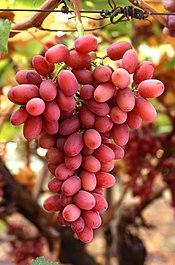 La fresa es una fruta climaterica