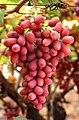 Grapes05.jpg