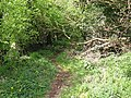 Grassy Lane - geograph.org.uk - 1842063.jpg