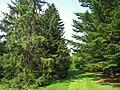 Graver Arboretum - 354.jpg
