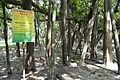 Great Banyan Tree - Indian Botanic Garden - Howrah 2012-09-20 0061.JPG
