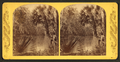 Grecian Bend, Oklawaha River, Fla, from Robert N. Dennis collection of stereoscopic views.png