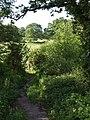 Green lane to Combpyne - geograph.org.uk - 450013.jpg