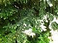 Greenwood forest farming 01.JPG