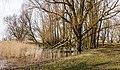 Groep bomen in verruigd biotoop. Locatie, Oostvaardersplassen 04.jpg