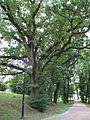 Gromnik park dworski 2.jpg