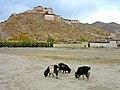 Gyantse Fortress (1).jpg