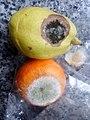 HK 生果 Fruits 發霉 Mold 柑桔 orange 梨 Pear Feb-2018 Lnv2 01.jpg