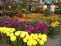 HK Sham Shui Po Fa Hui Park Flower Fair Trader.JPG