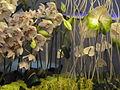 Haifa International Flower Exhibition P1140014.JPG