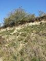 Halbtrockenrasen und Weingärten nördlich Oberthern sl2.jpg