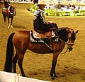 Half Arabian Ladies Western Sidesaddle (2669571672).jpg