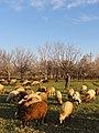 Hamadan Province, Do Rudan, Unnamed Road, Iran - panoramio (10).jpg