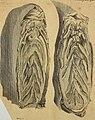 Hamburgisches Magazin, oder, Gesammlete Schriften, aus der Naturforschung und den angenehmen Wissenschaften überhaupt (1753) (14598387817).jpg