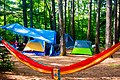 Hammock and tents in pine needles.jpg