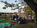 Hanami in Ohori Park 4.jpg