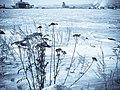 Harbor Weeds (2259667695).jpg