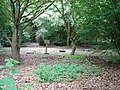 Hatch covers in the woods - geograph.org.uk - 1339627.jpg