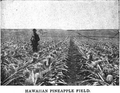 Hawaiian Pineapple Field.png