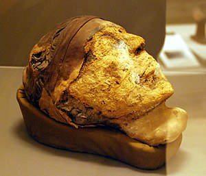 Djehutynakht (10A) - Image: Head of the Mummy of Djehutynakht