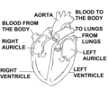 Heart Diagram (PSF).png