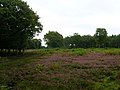 Heathland, Blean Wood - geograph.org.uk - 534495.jpg