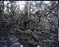 Heiau, Iao Valley, (3), photograph by Brother Bertram.jpg