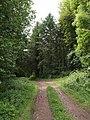 Homeland Wood - geograph.org.uk - 453378.jpg