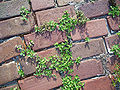 Horace Duncan House Lake City bricks02.jpg