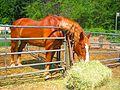 Horse (4158930293).jpg
