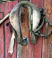 Horse Collar, MCCC, Mentone 7-2012 (7551153302).jpg