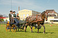 Horse driving at Stiegl 2011 06.jpg