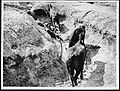 Horses in an old Boche communication trench (4688547130).jpg