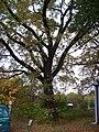 Hostavice, Farská, památný dub, blíže ulice.jpg