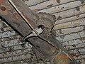 House swallows - panoramio.jpg