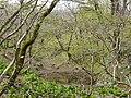 Ibarakawacho, Higashiomi, Shiga Prefecture 527-0216, Japan - panoramio (3).jpg