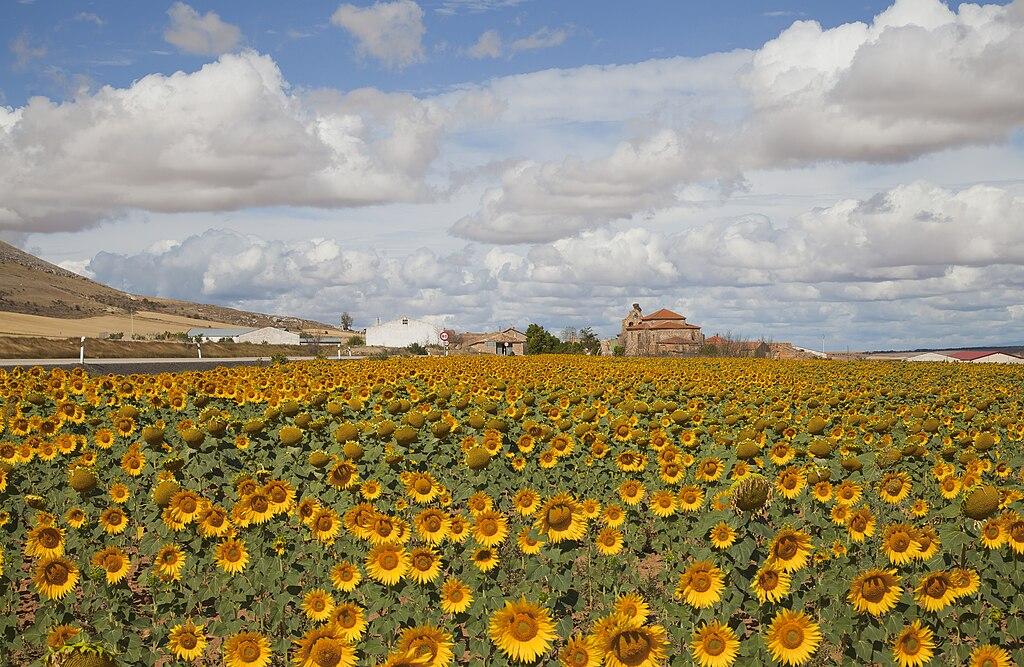 Agricoltura - foto di Diego Delso