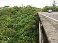 Incredible Vista of Nanue Stream Gulch from Hawaii Route 19, Hawaii (4528494027).jpg