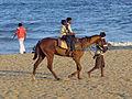 India - Chennai - Pony rides on the beach (2281758052).jpg