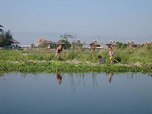 Image:Inle-Floating-Farm