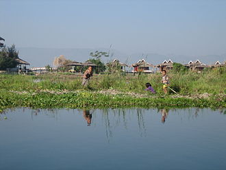 Inle Lake - Floating farm