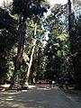 Inner Sando of Kashima Shrine.jpg