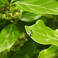 Insects from Madayipara DSCN2175.jpg