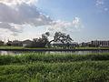 Isaac Bayou Tree Picnic.JPG