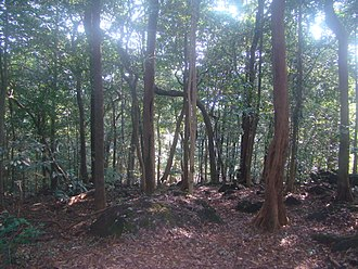 Jangali Jayagad - Jungle