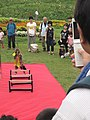 Japanese monkey performance on summit of ski mountain in Shiga prefecture.jpg