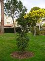 Jardinmonaco6.jpg