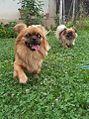 Jessie and Lissa,,,R.I.P Jessie..jpg
