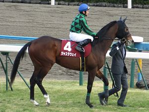 Just a Way 106th Kyoto Kinen IMG 1096-2 20130210.JPG